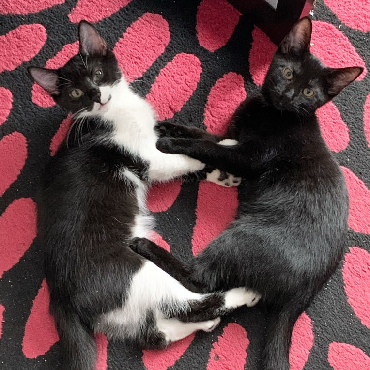 Luna & Nyx